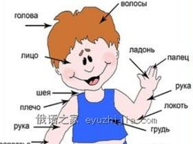 俄语学习 身体常见各部位的俄语名称