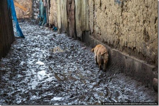 探访生活在乌克兰城市 别列戈沃的吉普赛人(14张)