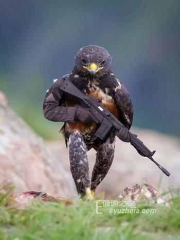 一只秃鹰引发的PS大战 俄罗斯网友更能玩